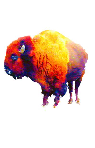 dijital olarak oluşturulan soyut buffalo illüstrasyon - boğa hayvan stok fotoğraflar ve resimler
