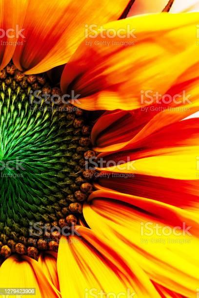 Photo of Digitally enhanced macro flowers