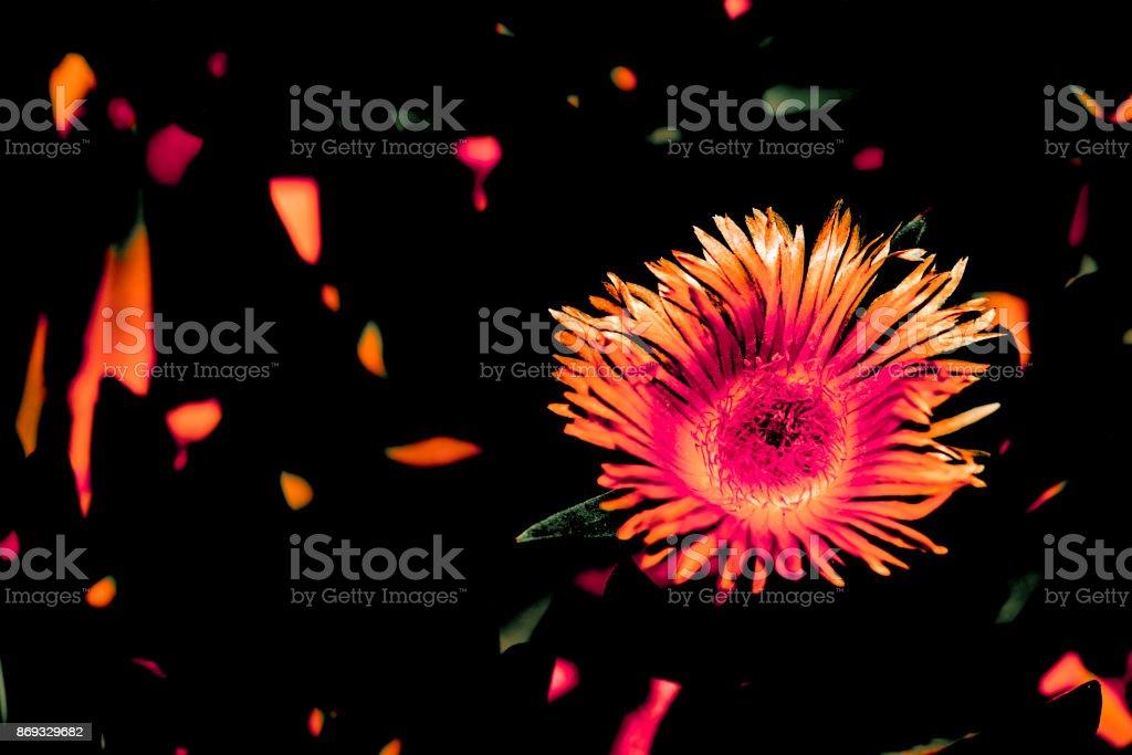 digitally enhanced photo of a purple aster flower stock photo