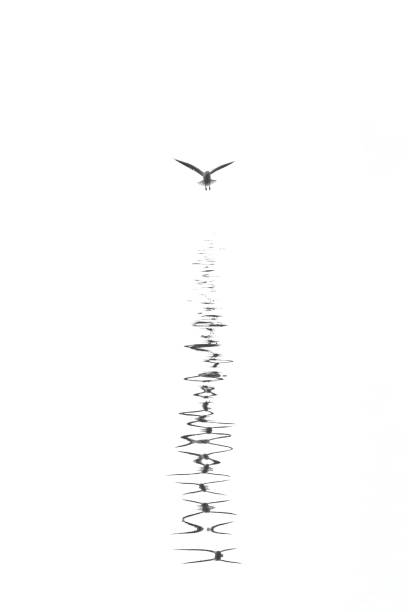 Digitally generated view of seagull flying