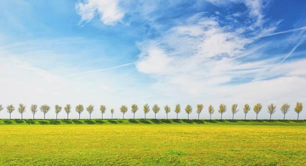 dike met een rij bomen in de beemster polder - beemster stockfoto's en -beelden
