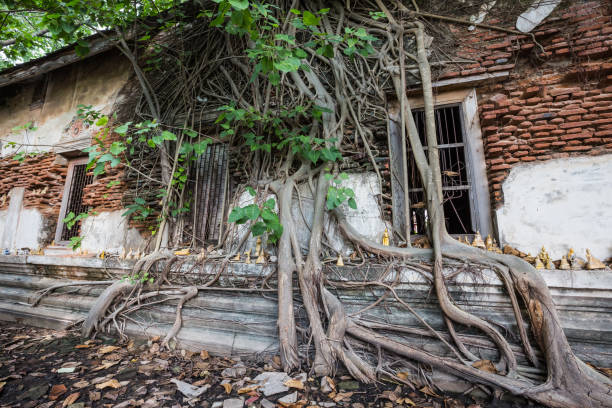Dilapidated church in Wat Rat Bamrung (Wat Ngon Kai) - Samut Sakhon, Thailand Dilapidated church in Wat Rat Bamrung (Wat Ngon Kai) - Samut Sakhon, Thailand dilapidate stock pictures, royalty-free photos & images