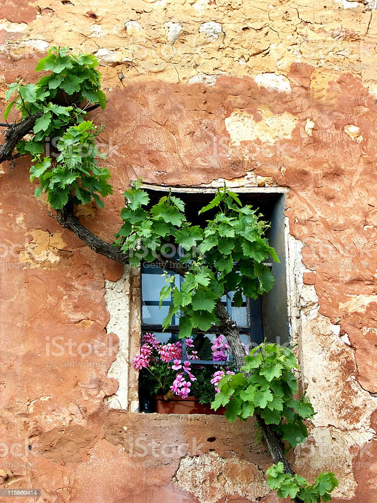Dilapidated  wall with vine and pelargonium flowers,Rousillon,Provence,France stock photo