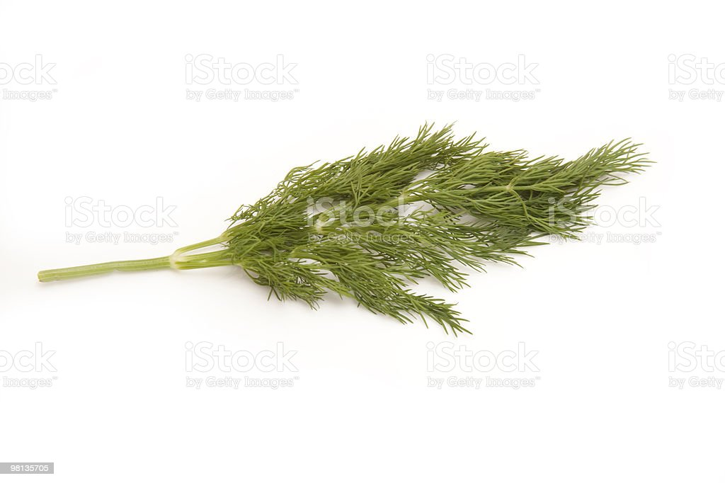 Dill herb isolated on a white background. royalty-free stock photo