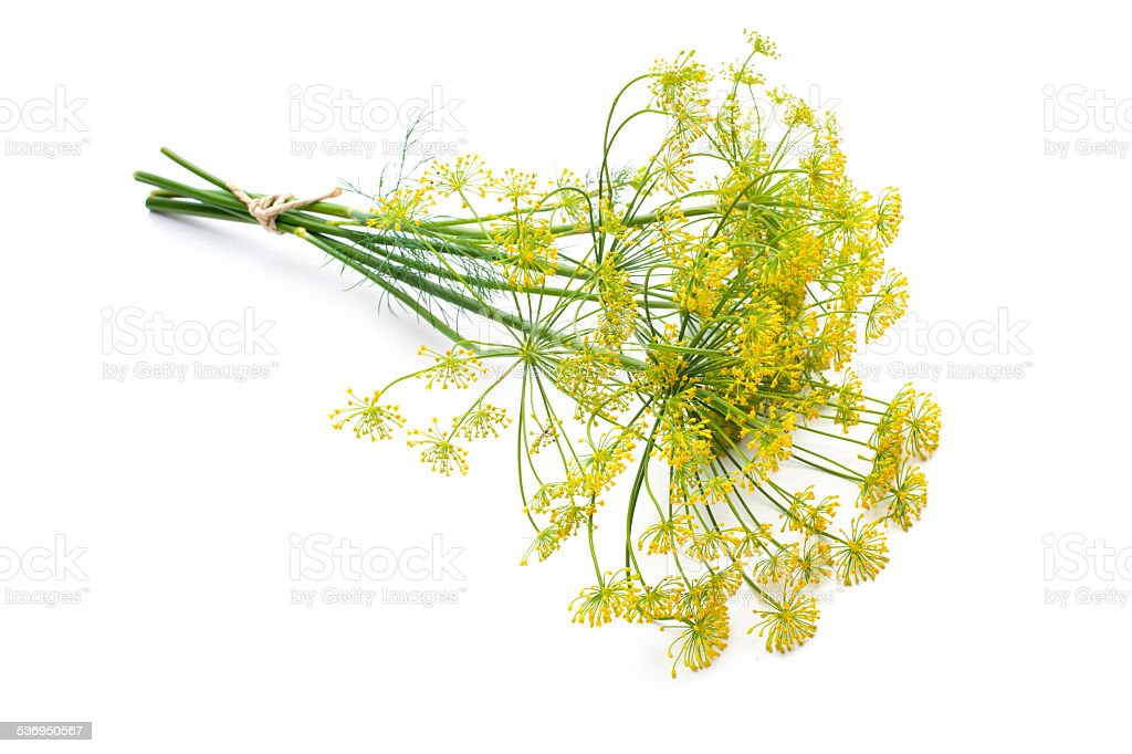 Dill isolated on white stock photo