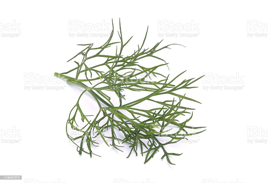dill isolated royalty-free stock photo