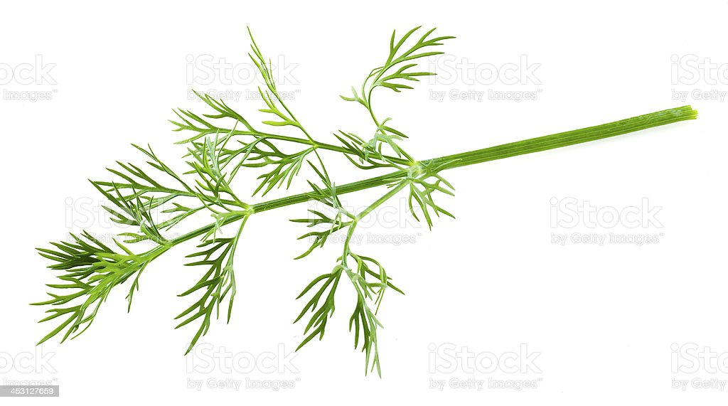 dill isolated stock photo