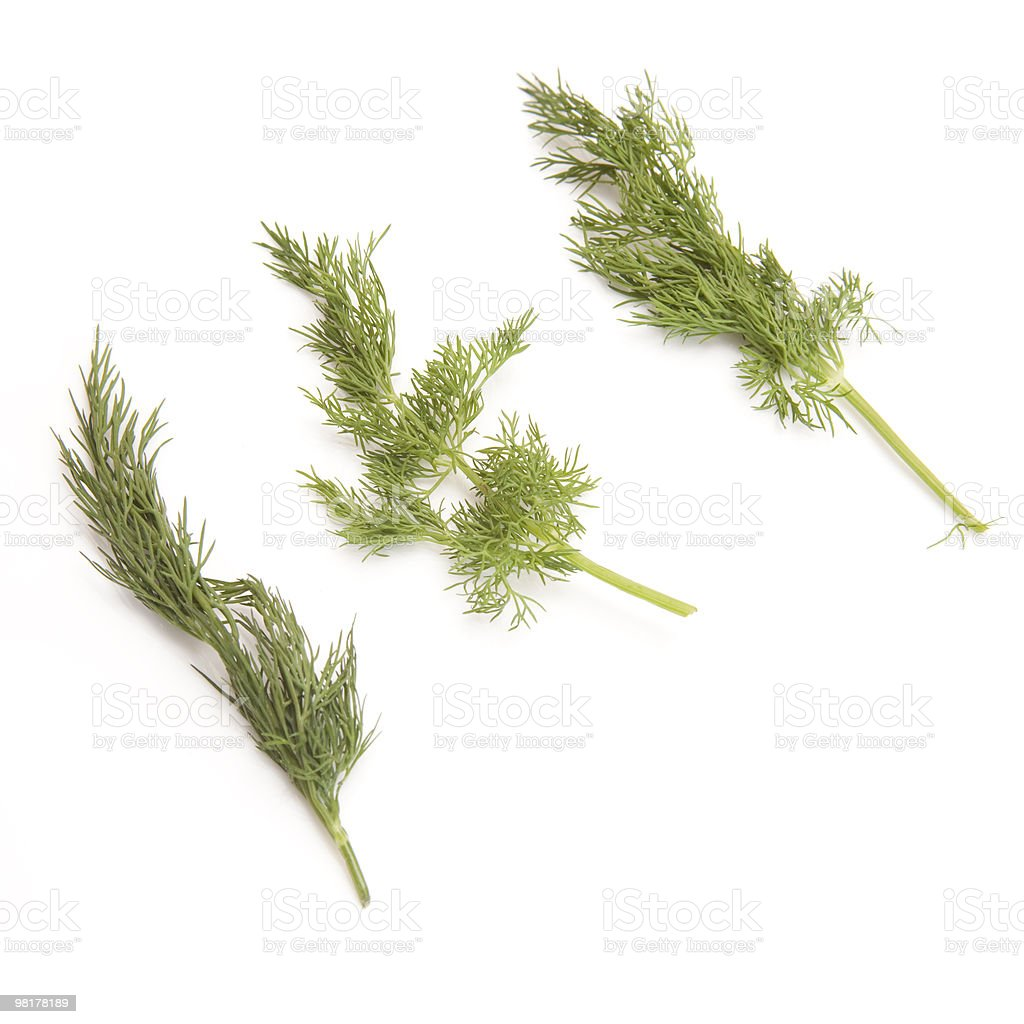 Dill leaves isolated on a white background royalty-free stock photo