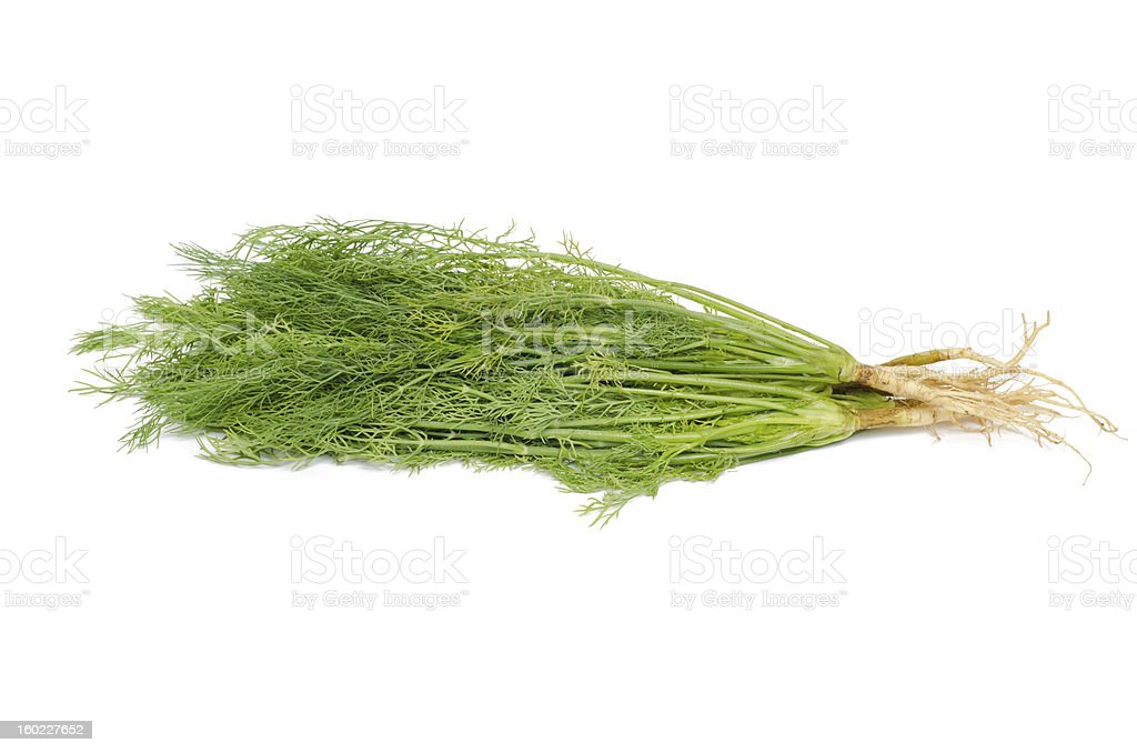 dill on white background royalty-free stock photo