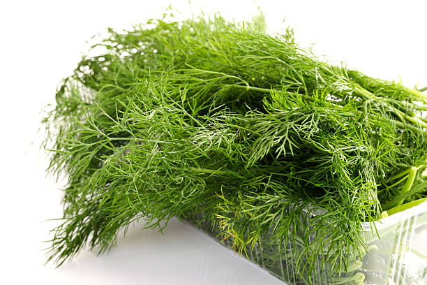 dill (anethum graveolens) - essensbox stock-fotos und bilder