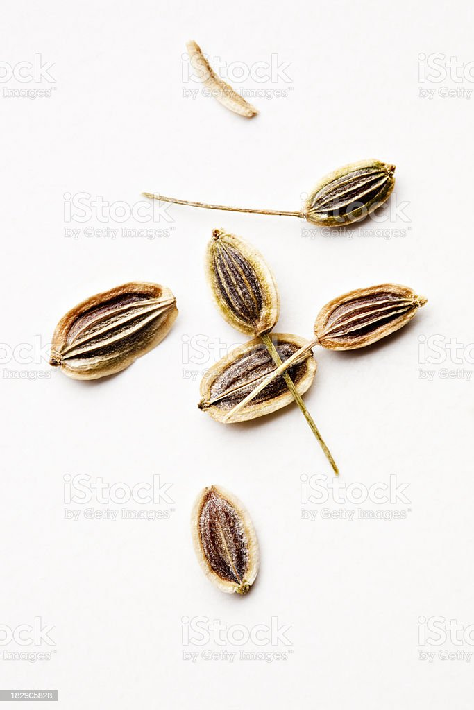 Dill seeds close-up royalty-free stock photo