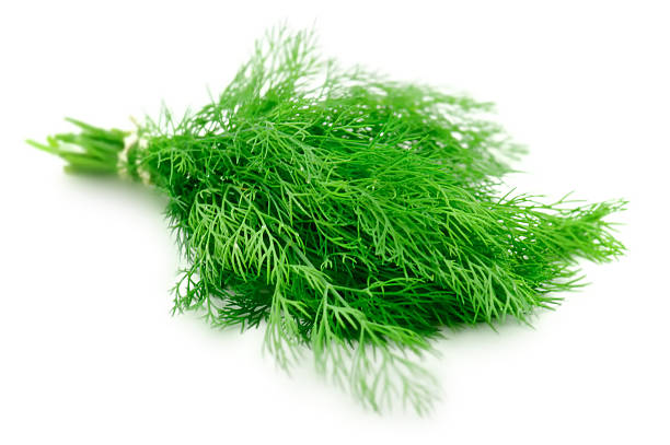 dilll fresh branches of green dillfruits and vegetables collection: dill stock pictures, royalty-free photos & images