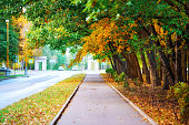 Diminishing perspective of autumn tree alley