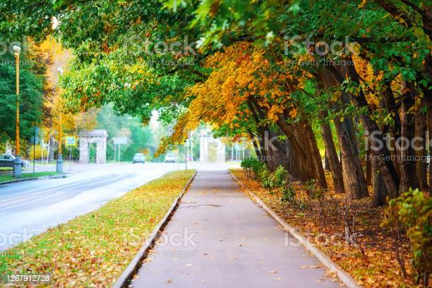 Photo of Diminishing perspective of autumn tree alley in campus of famous Moscow university