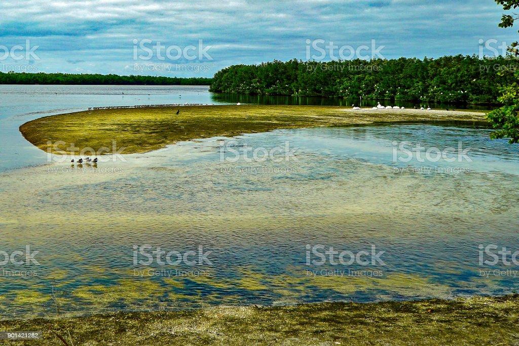 Ding Darling National Wildlife Refuge 5 stock photo