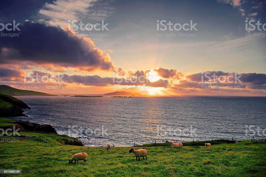 L0039  Dingle Peninsula, Co.Kerry, Ireland stock photo