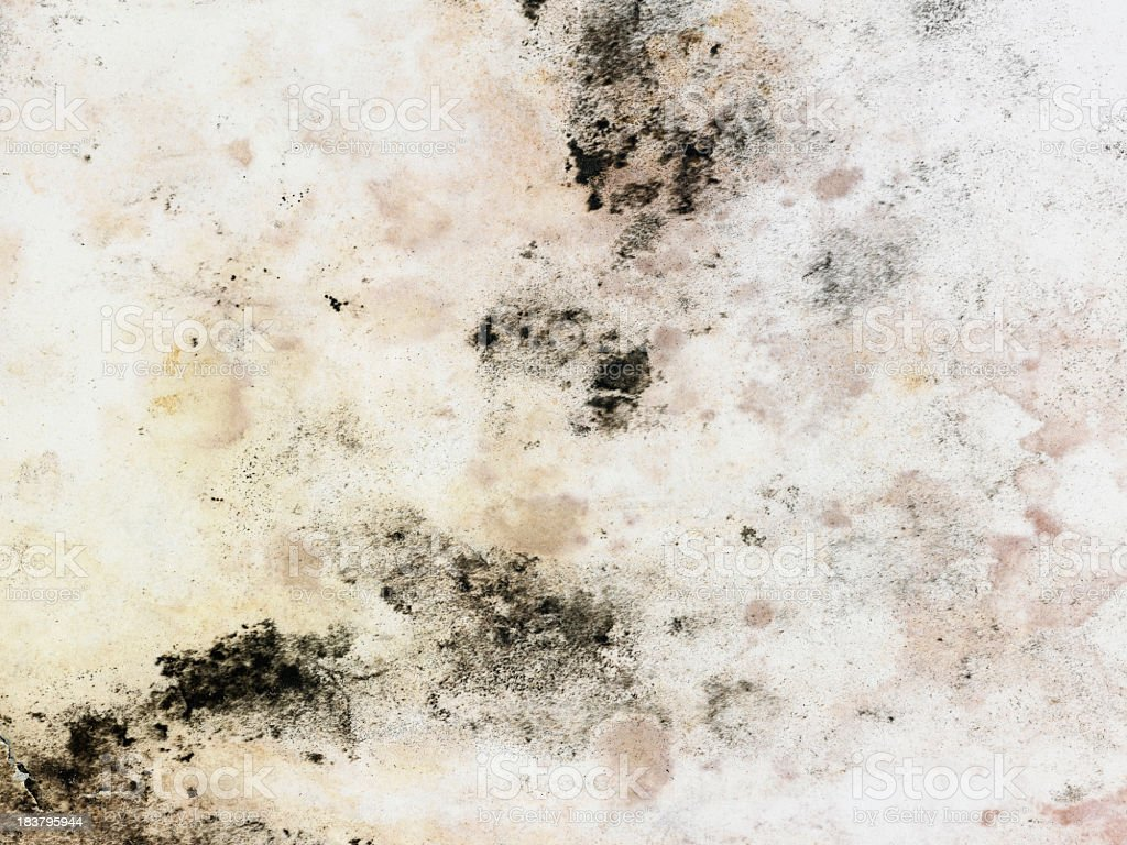 A dingy white surface with blotches of moldy stains royalty-free stock photo