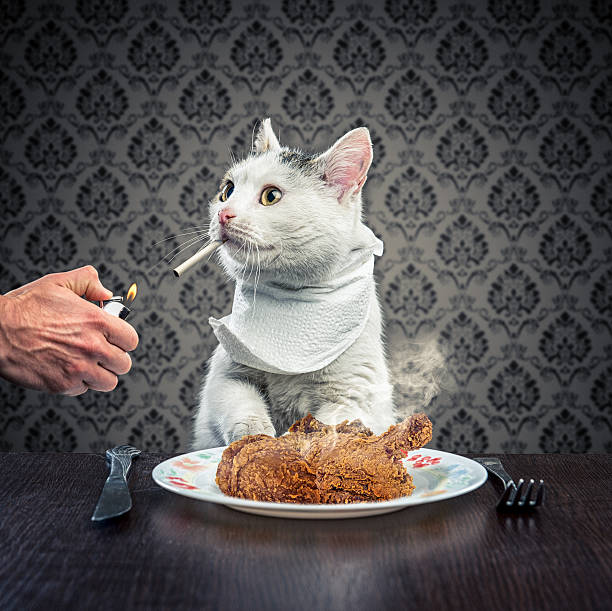 dinner time - chicken bird stock pictures, royalty-free photos & images