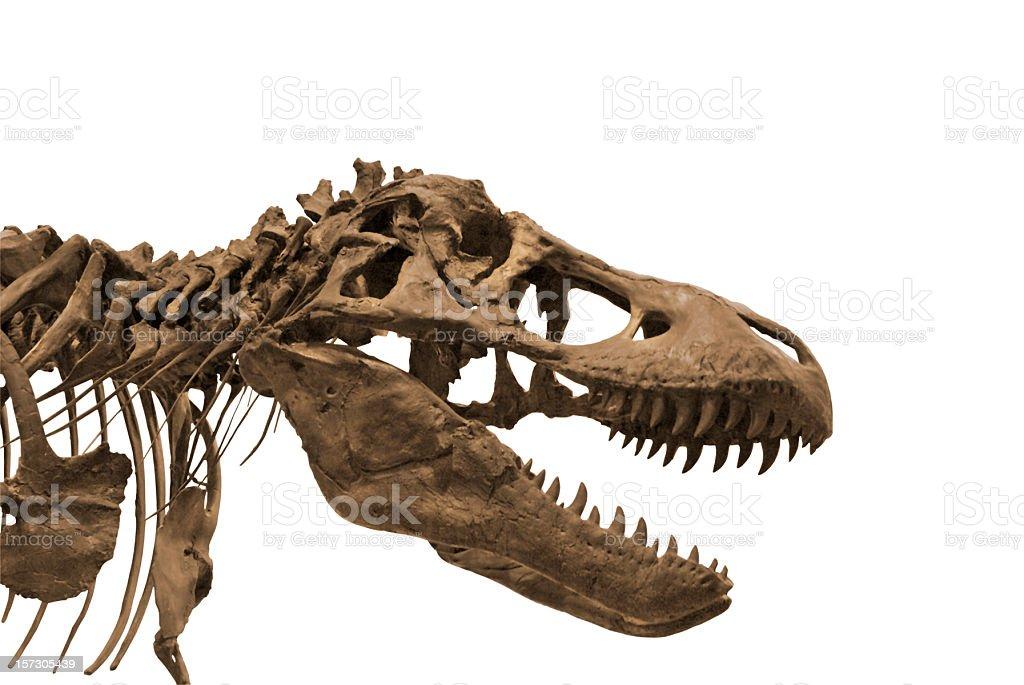 Dinosaur 3 royalty-free stock photo