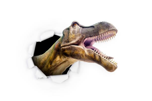 dinosaur breaking through - gran inauguración fotografías e imágenes de stock