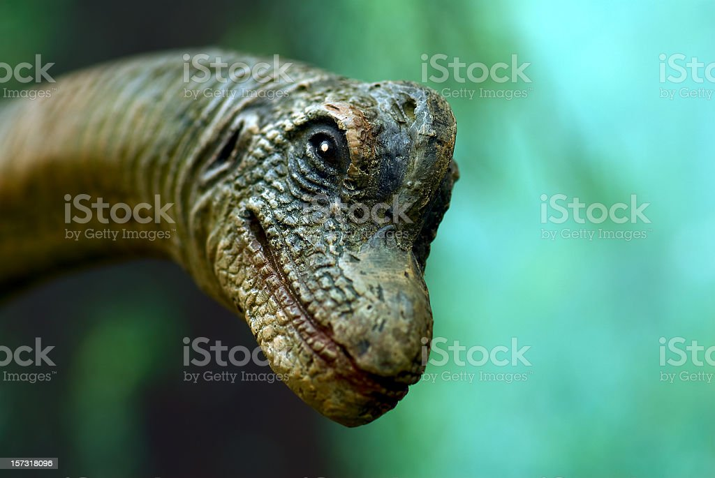Dinosaur Face stock photo