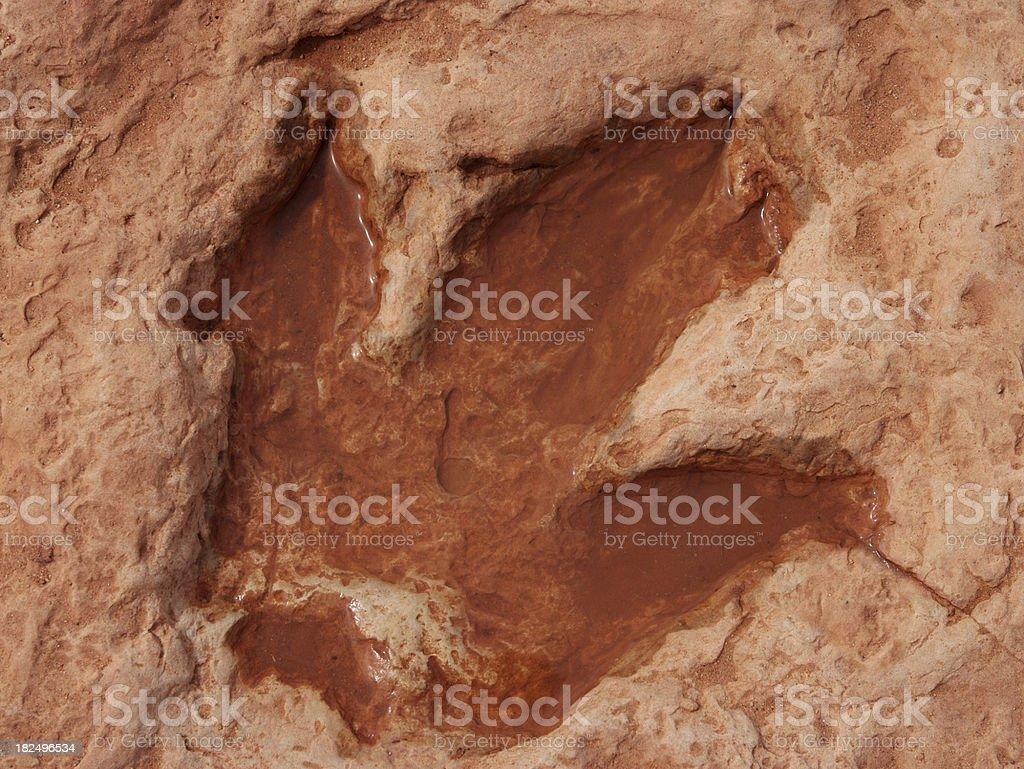 恐竜フットプリント ストックフォト