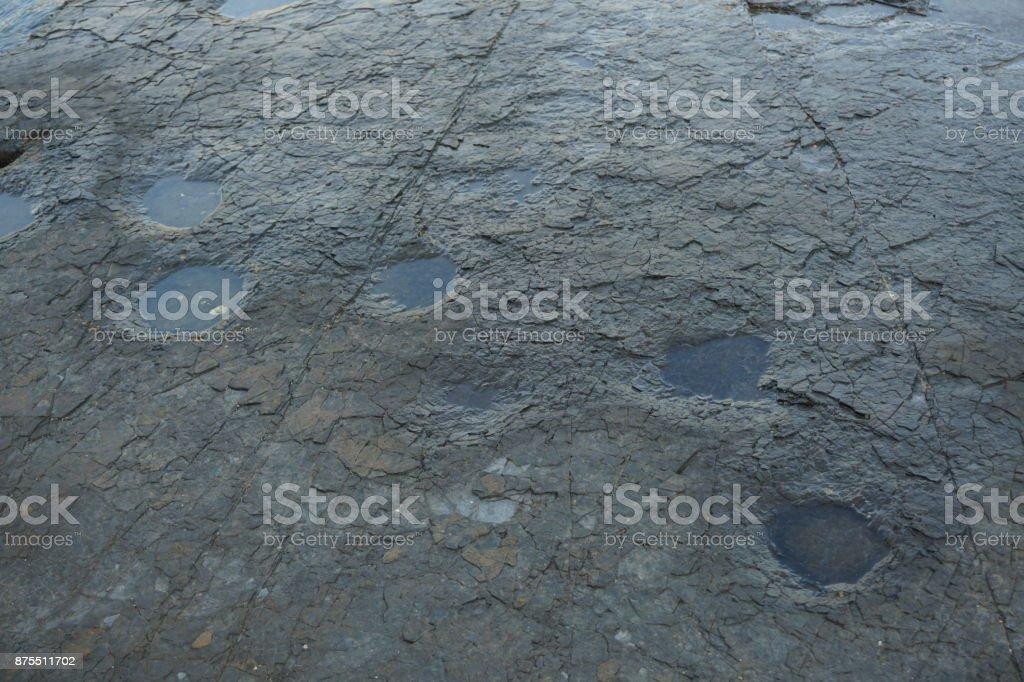 Dinosaur footprints fossil carved in rock