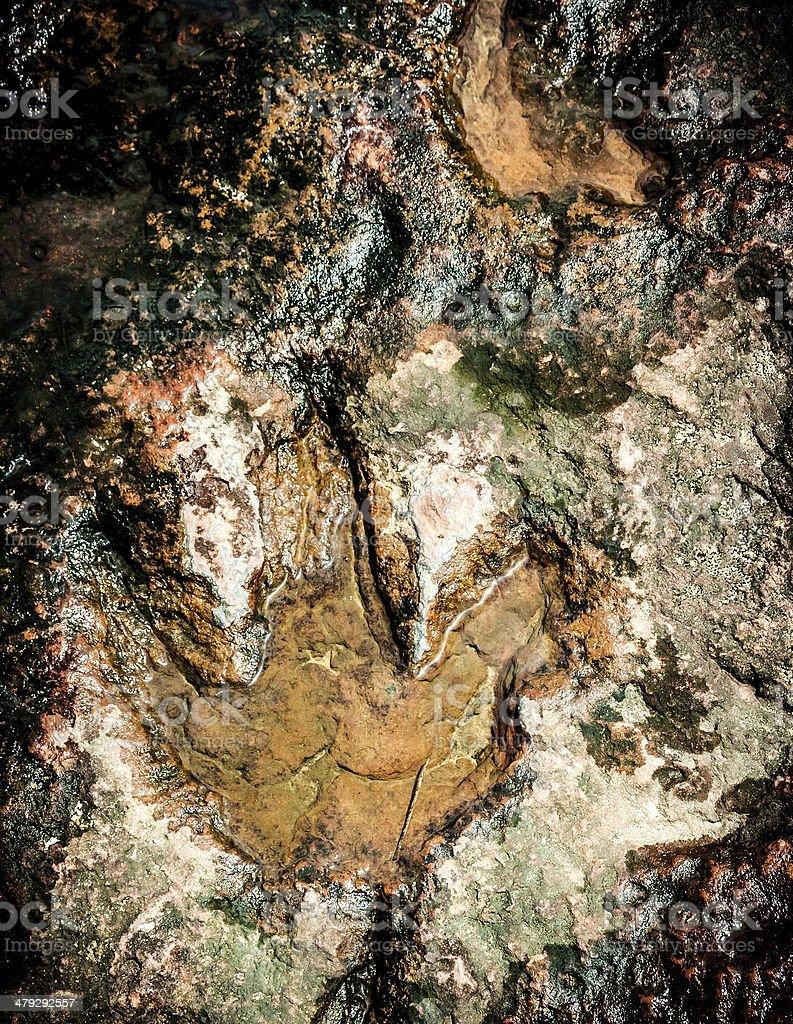 Dinosaur footprints stock photo