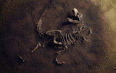 istock Dinosaur Fossil (Tyrannosaurus Rex) Found by Archaeologists 1187632820