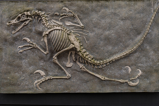 Dinosaur fossil from prehistoric evolution isolated on brown background