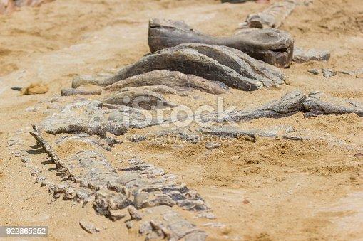 istock Dinosaur fossil simulator excavation in sand 922865252