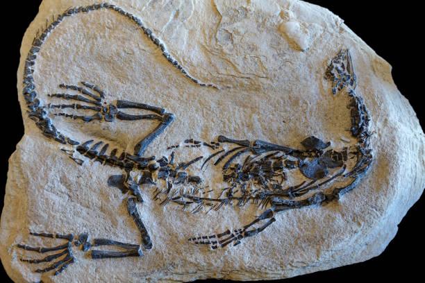 Dinosaur fossils on sand stone background ストックフォト