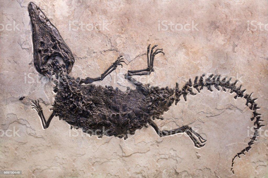 Dinosaur fossils on sand stone background stock photo