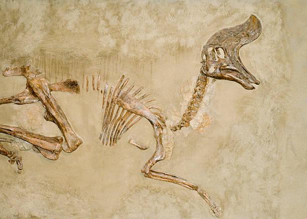 恐竜化石 ストックフォト
