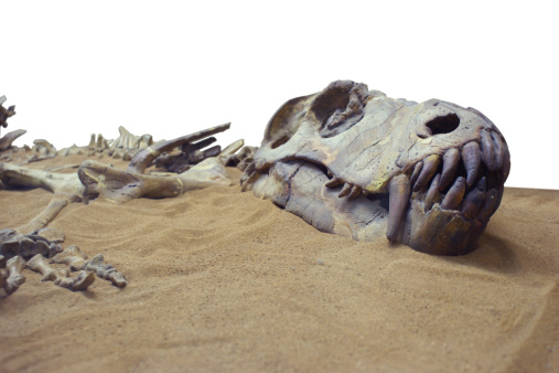 Fossilized dinosaur bones and skull in the send.