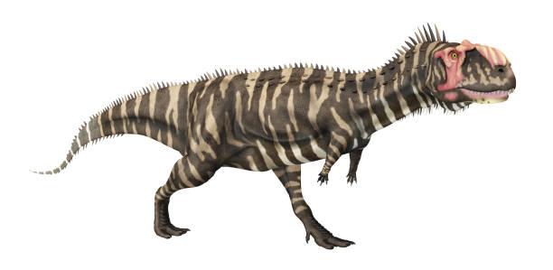 beyaz arka plan üzerinde izole dinozor rajasaurus - omurgalı stok fotoğraflar ve resimler
