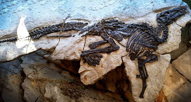 恐竜の骨-化石 ストックフォト