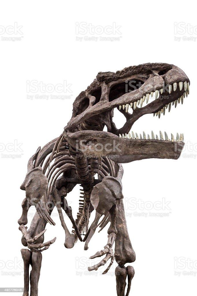 Dinosaurier-Skelett eines tyrannosaurus rex – Foto