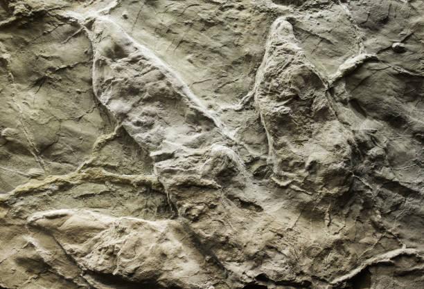 Dinosaur stone footprint stock photo