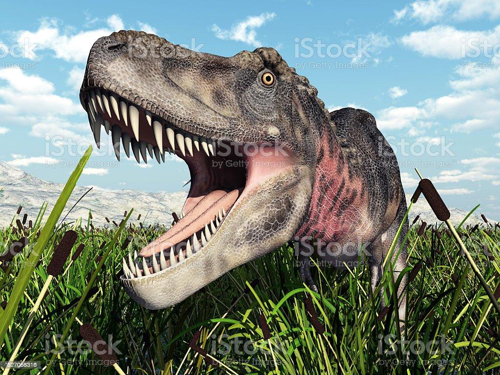 Dinosaur Tarbosaurus stock photo