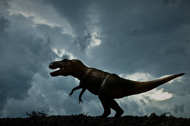 dinosaur tyrannosaurus rex - tyrannosaurus rex stock photos and pictures