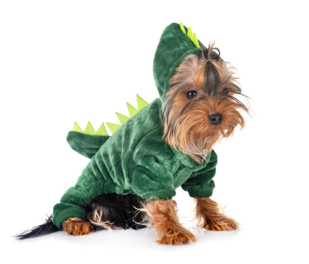 dinosaur yorkshire terrier dinosaur yorkshire terrier in front of white background pet clothing stock pictures, royalty-free photos & images