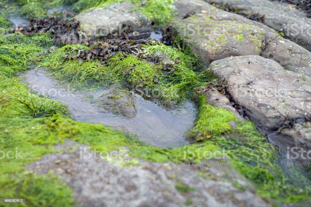 A Dinosaurs Footprint on the Isle Of Skye stock photo