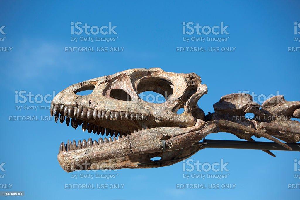 Dinosaur's head skull and blue sky, Ischigualasto stock photo