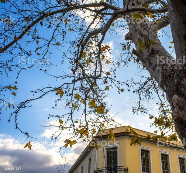 Photo of Dionysiou Areopagitou Street, square photo of neoclassical yellow building and oak tree trunk  branches and leaves against blue sky with clouds.