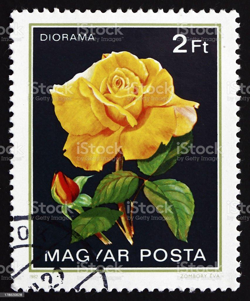 Diorama, Rose Flower royalty-free stock photo