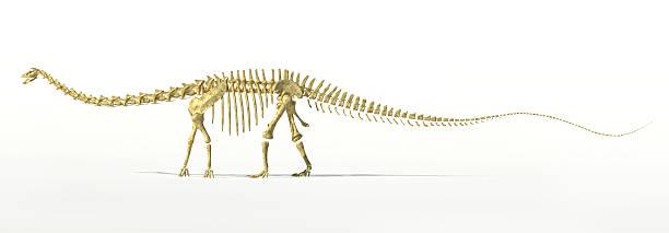 Diplodocus dinosaur full skeleton photorealistc rendering. stock photo