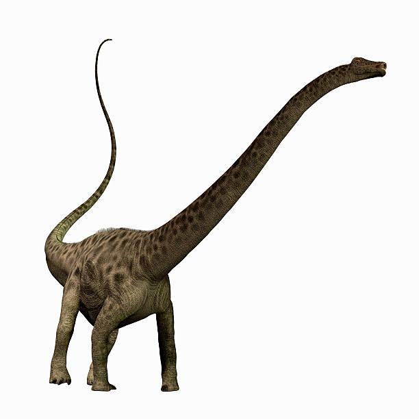Diplodocus profile picture id165241972?b=1&k=6&m=165241972&s=612x612&w=0&h=eczl2x eydjcsxvvt4rdjtp8ud4b1uoyowefebrb6ck=