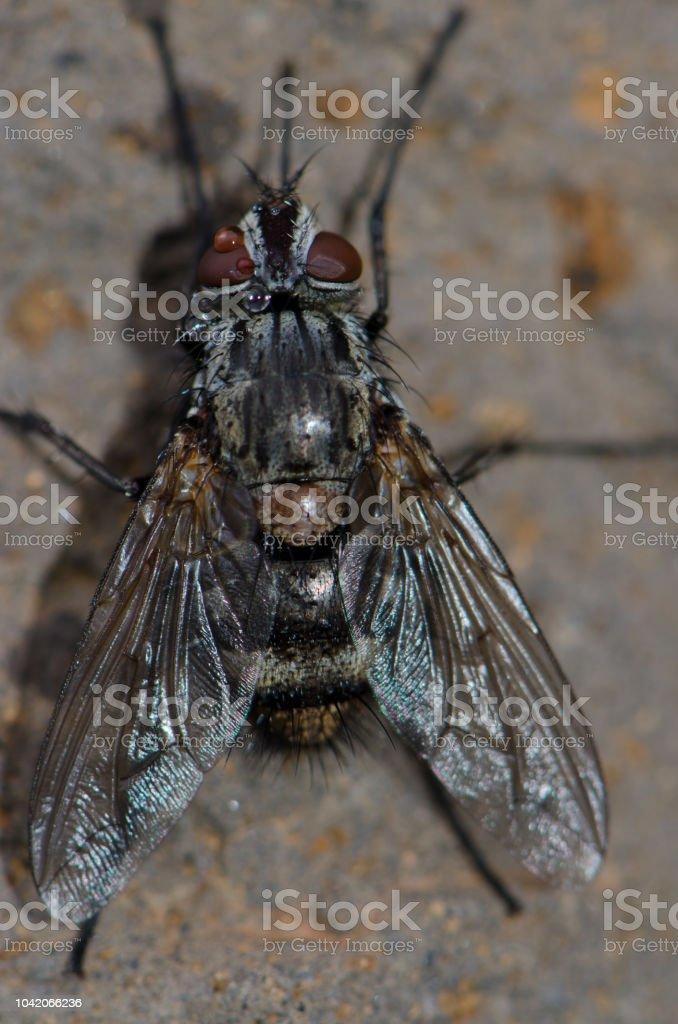 Diptera. - foto de acervo