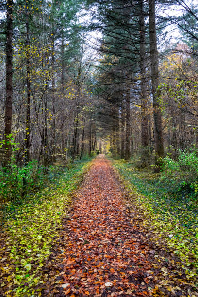 A direct path in the middle of the forest with colorful leaves on the ground stock photo